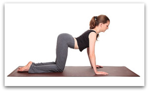 Cow Pose Yoga Stretch